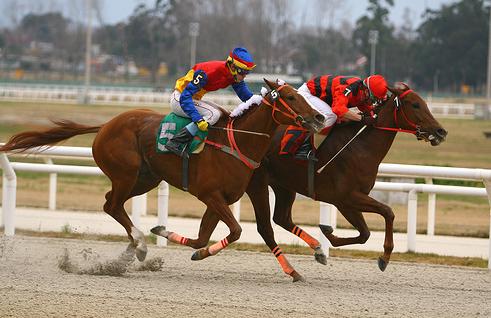 Fotos de caballos de carrera