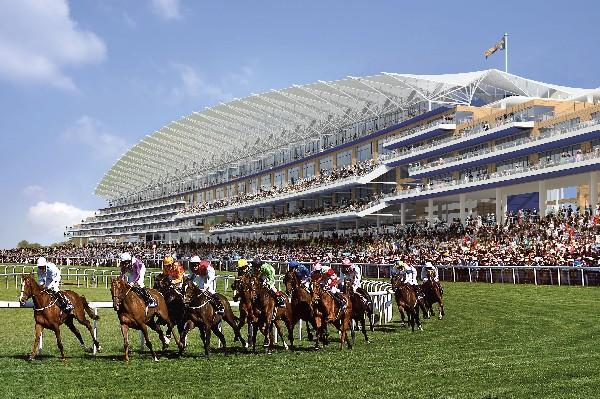 caballos de carreras. las carreras de caballos