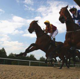 Apuesta de caballos en el hipódromo de Kempton, 14 de diciembre